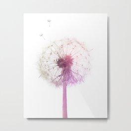 Rainbow Dandelion Wish on White Metal Print