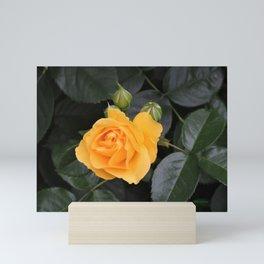 "A Rose Named ""Julia Child"" Mini Art Print"