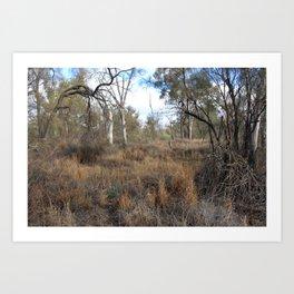 Sunraysia Bushland Art Print