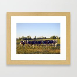 Cows In The Country II Framed Art Print