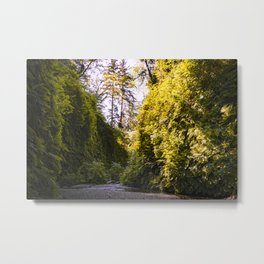 View of Fern Canyon Metal Print