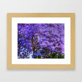 Springtime In Southern California Framed Art Print