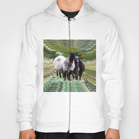 mountain sheep Hoody