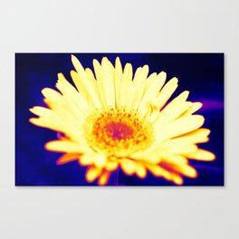 neon daisy Canvas Print