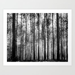 trees in forest landscape - black and white nature photography Art Print