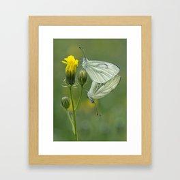 Butterfly Love Framed Art Print
