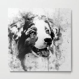 australian shepherd dog 2 wsbw Metal Print
