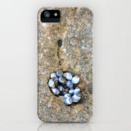 Shell Huddle iPhone Case