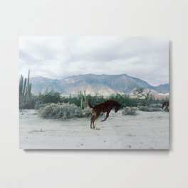 Bucking in Baja Metal Print