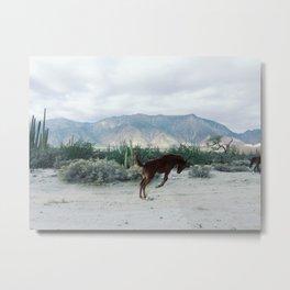Bucking in Baja Metal Print