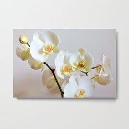 Orchid romace Metal Print