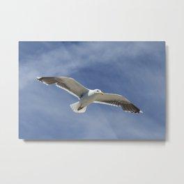 Wildlife Seagull flying Metal Print