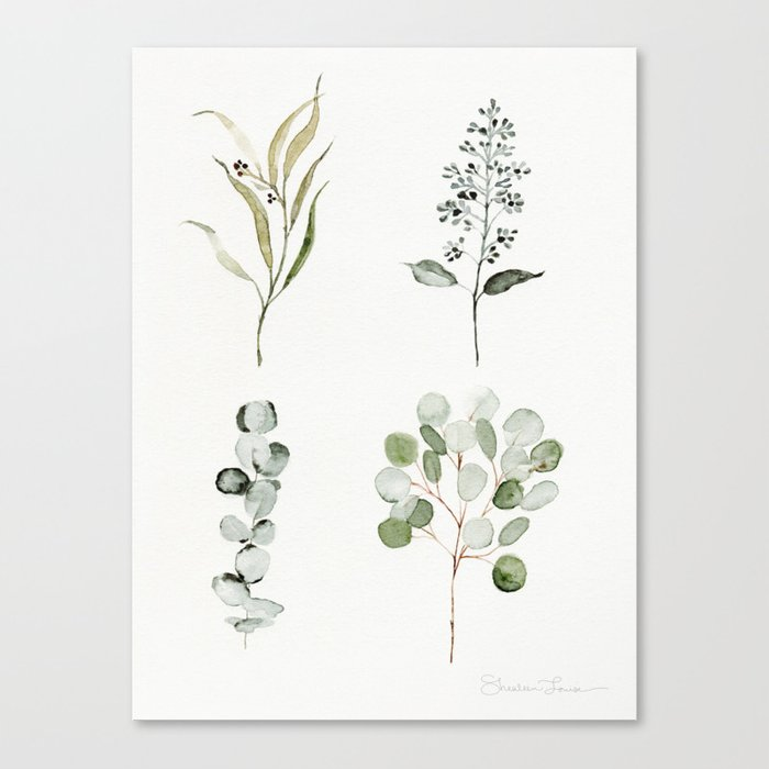 Eucalyptus Branches Canvas Print