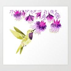 Lucifer Hummingbird Art Print