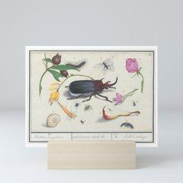Vintage Beetle and Botanical Scientific Illustration, 16th Century Mini Art Print