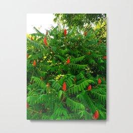 Sumach Bush Flowering Metal Print