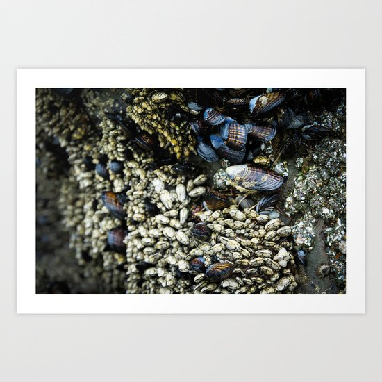 Mussels Art Print