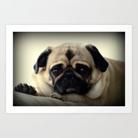 The Posing Pug Art Print