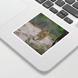 Female Lion at Tembe Elephant Park Sticker
