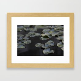 Water Lily Pads Framed Art Print