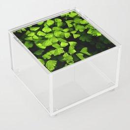 Maidenhair Ferns Acrylic Box
