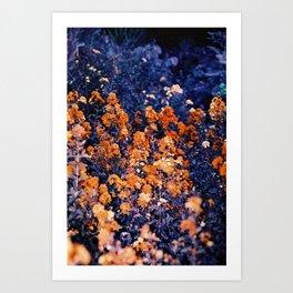 Infrarouge  Art Print