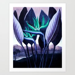 Birds of Paradise Temple of Flora Blue Mint Art Print