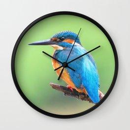 Common Kingfisher (Alcedo atthis) Eurasian Kingfisher Bird sitting on a Branch Wall Clock