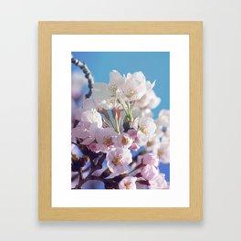 Sakura 02 Framed Art Print