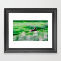 Fox on the run. Framed Art Print
