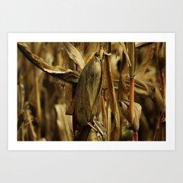 Corn anyone? Art Print