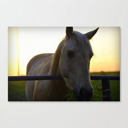 Beautiful Horse at Sunset Canvas Print