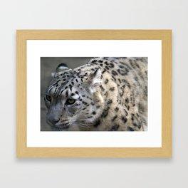 Closeup of a snow leopard Framed Art Print