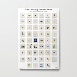 Taxidermy Thursdays: 52 Weeks of Wildlife Watercolor Paintings Metal Print