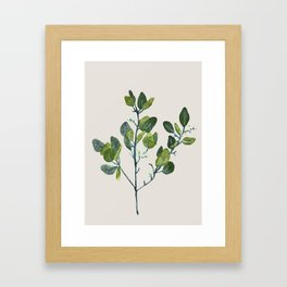 Eucalyptus Branch Framed Art Print