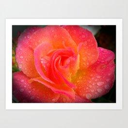 Spring Showered Rose Art Print