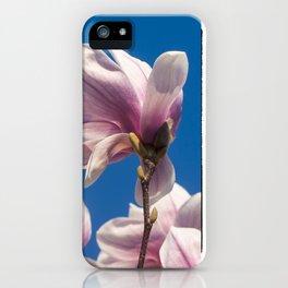 Magnolia tree blossoms iPhone Case