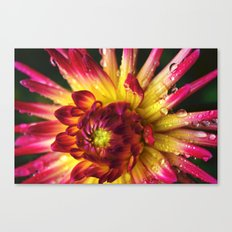 Dahlia Photography Close Up Macro photography Canvas Print
