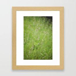 Summer Softness by Althéa Photo Framed Art Print