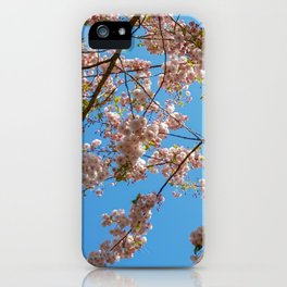 Cherry Blossoms and Blue Sky at Kew Gardens 2019 iPhone Case