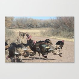 Turkey time Canvas Print