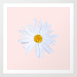 Daisy On Pink Art Print