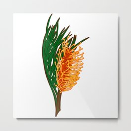 Australian Native Floral Illustration - Beautiful Banksia Flower Metal Print