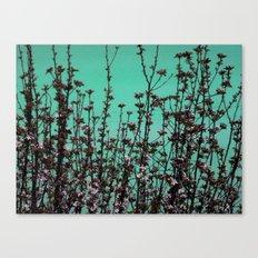 Azur Canvas Print