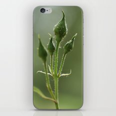 New Rose Unbloomed iPhone & iPod Skin