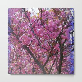 Dogwood Pink Purple Tones Metal Print