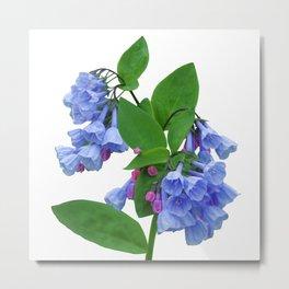 Spring Bluebells Metal Print