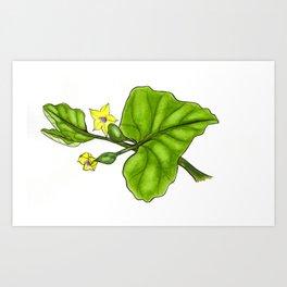 Cucumber Blooms Art Print