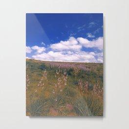 Asphodelus ramosus Metal Print