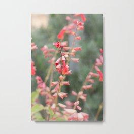 Botanicals Metal Print